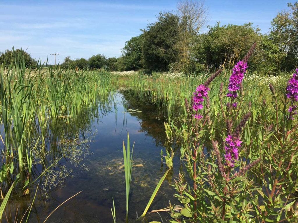 HS2: Webinar on new habitats for local wildlife in the West Midlands